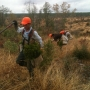 Tree Planting Crew using Hand Dibbles